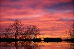 Vogelzug am linken Niederrhein .....