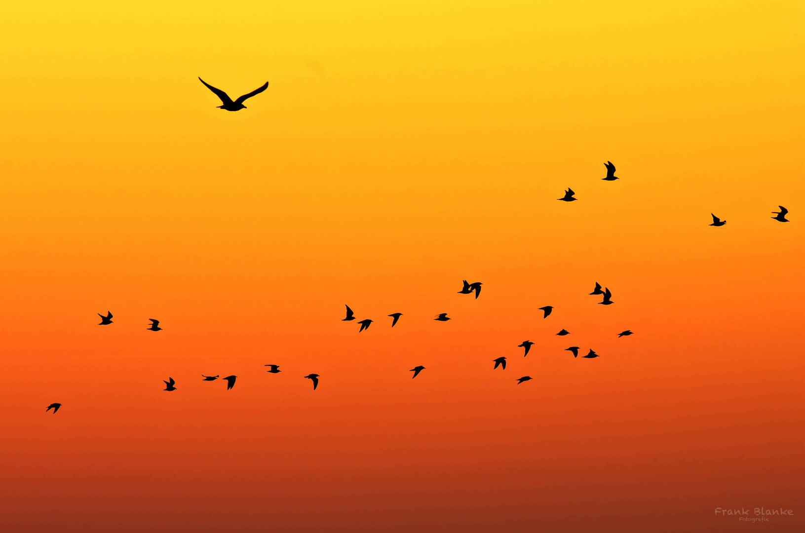 Vogelzug im Morgengrauen