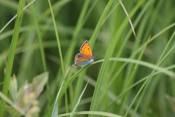 Voilà ce papillon dont je ne connais pas le nom