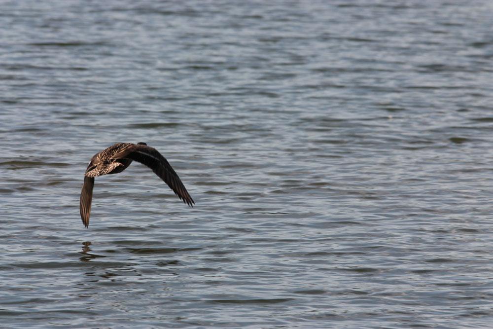 Vol au-dessus des eaux
