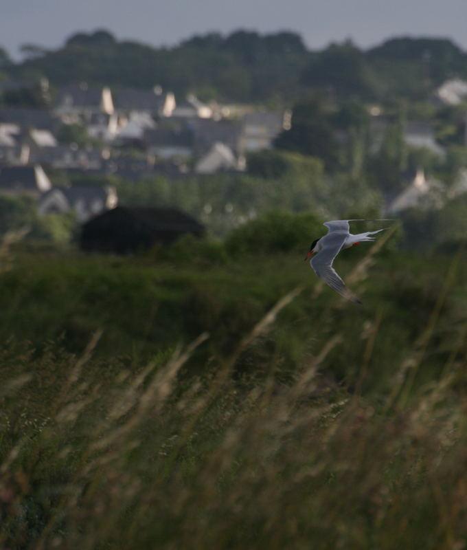 vol au dessus des marais salant de guerande