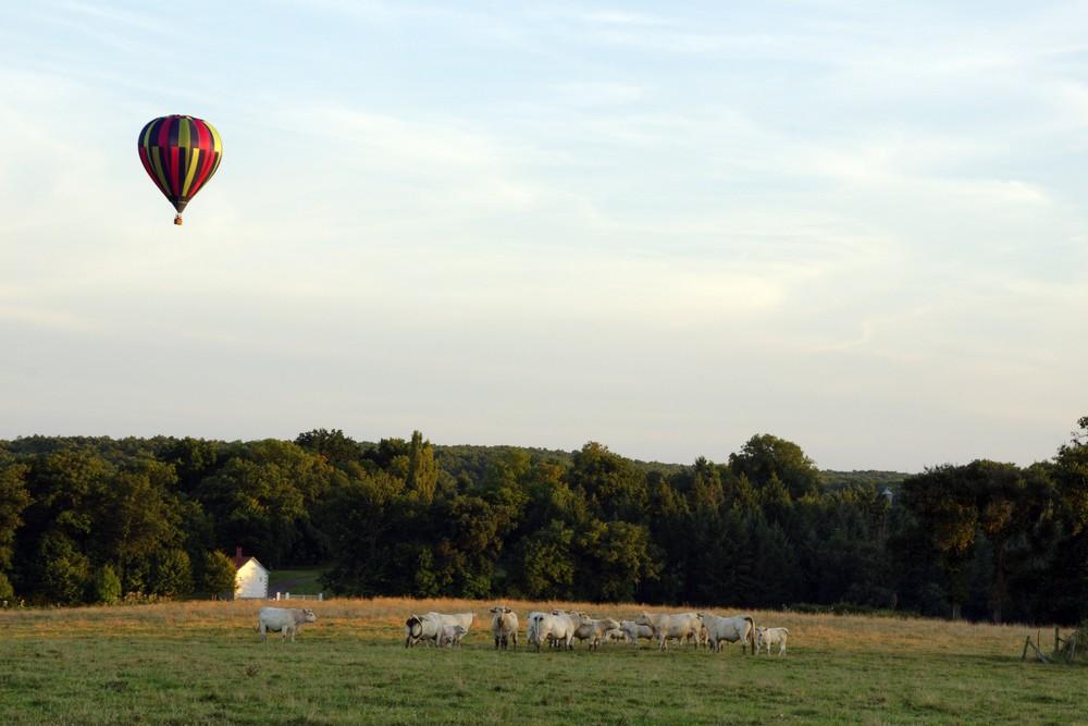 Vol au-dessus du troupeau