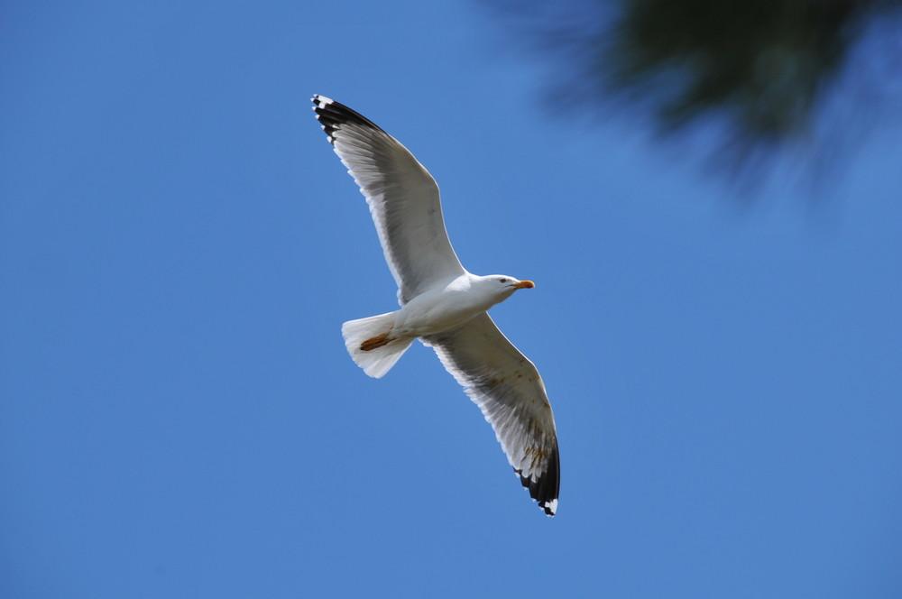 Vol au dessus d'un nid de...