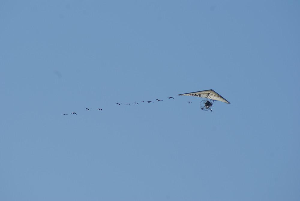 vol avec des oies 3