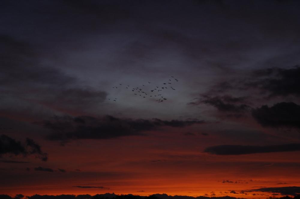 Vol de Grues dans un ciel flamboyant
