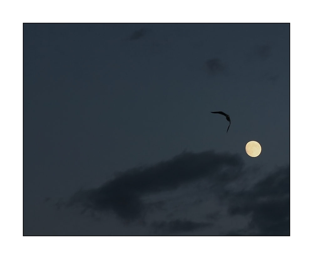 ... vol de nuit (2) ... / ... night-flight ... (2)