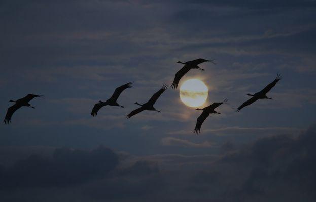 Vol de nuit   -   Nachtflug