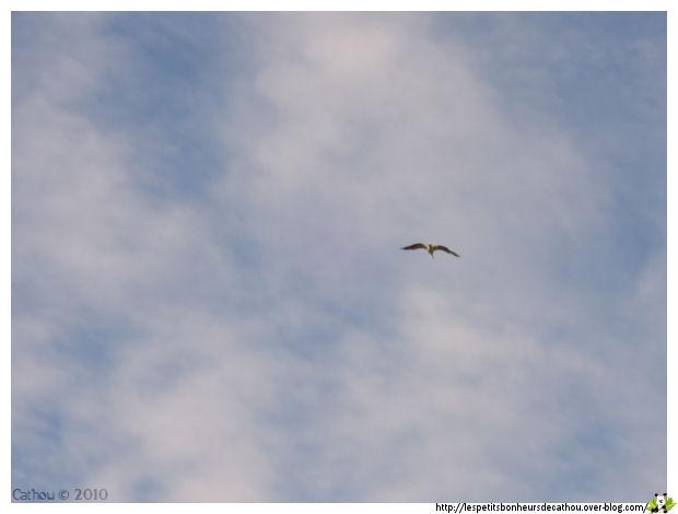 Vol de rapace