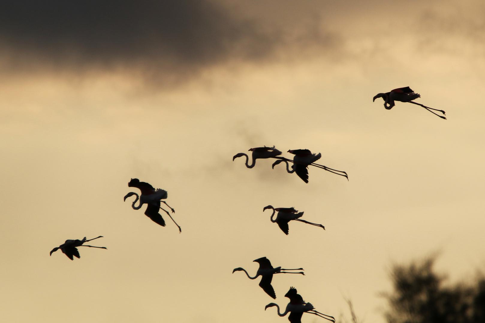 Vol du soir sur les marais !