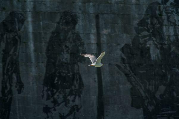 Volando sui murales di Kentridge