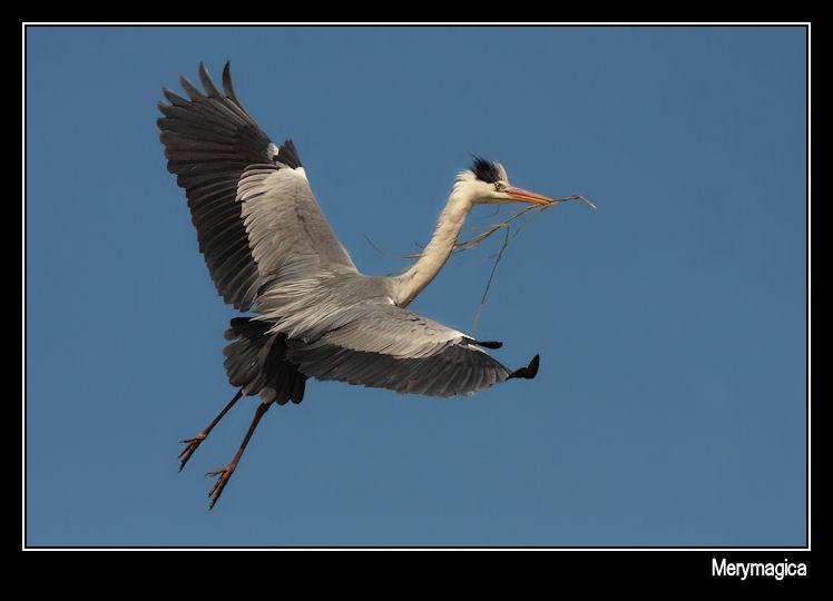 Volando voy... volando vengo