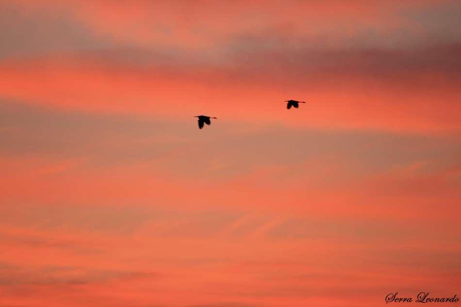 Volano verso il tramonto .