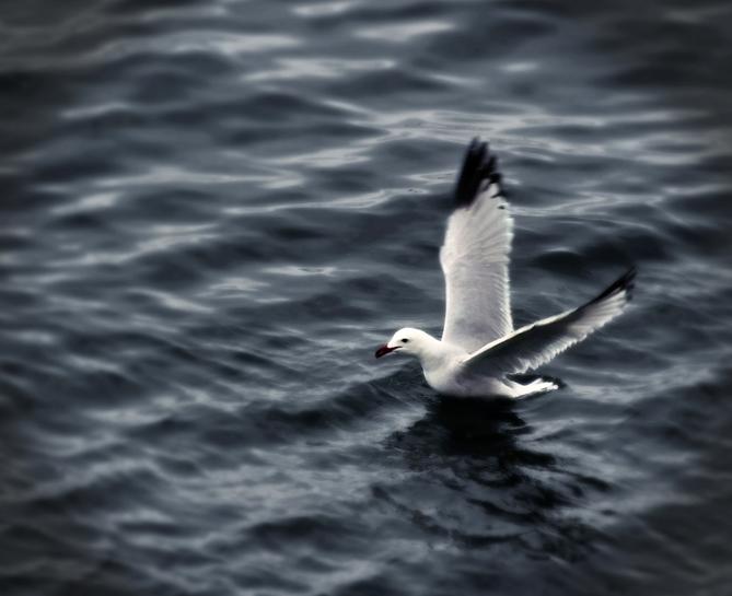 Volar sobre el agua.