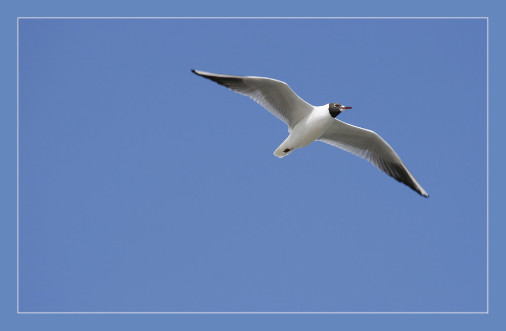 Volare... nel blu dipinto di blu.....