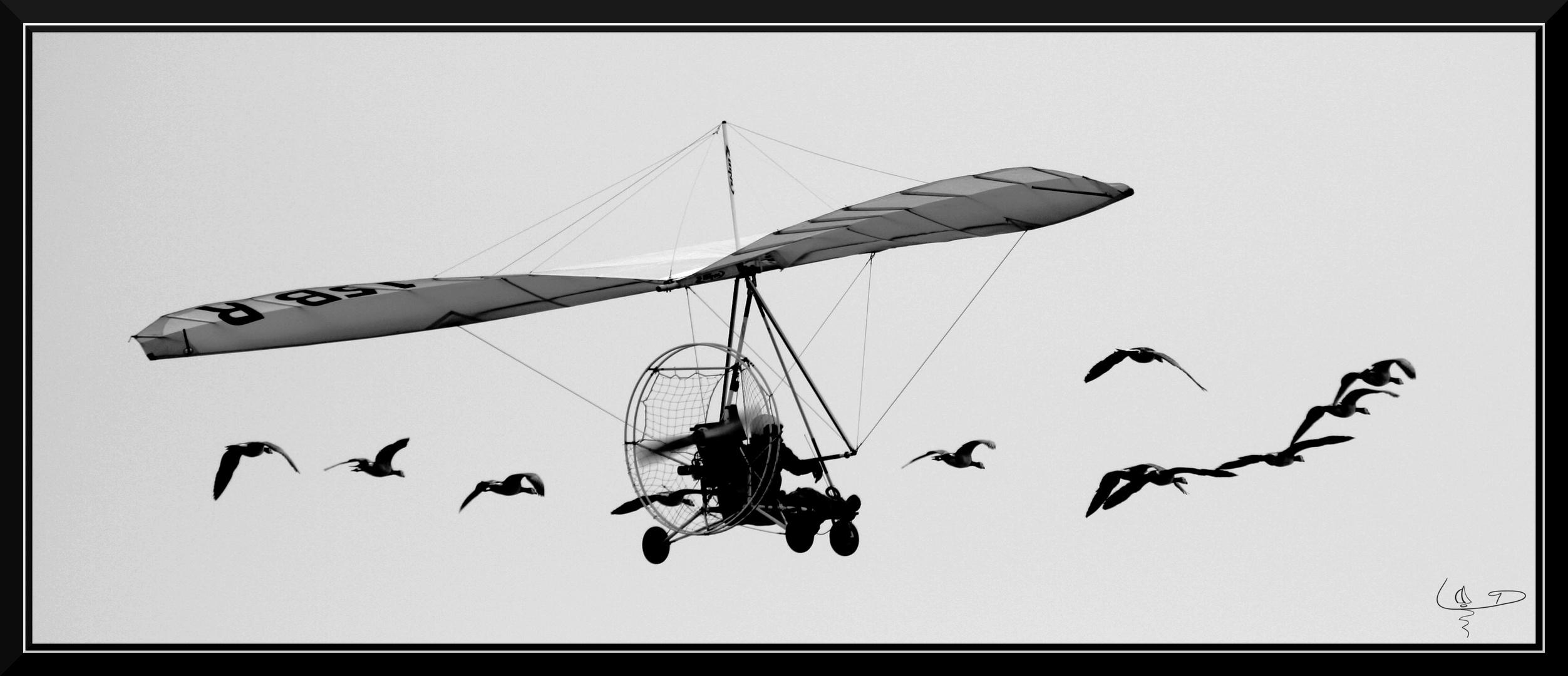 Vole avec les oies....