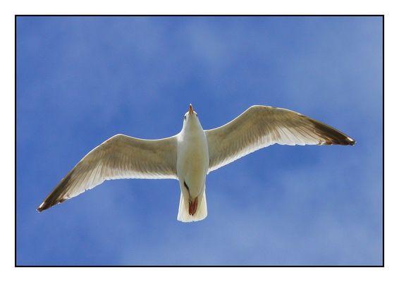 """"""" Voler dans le bleu du ciel """""""
