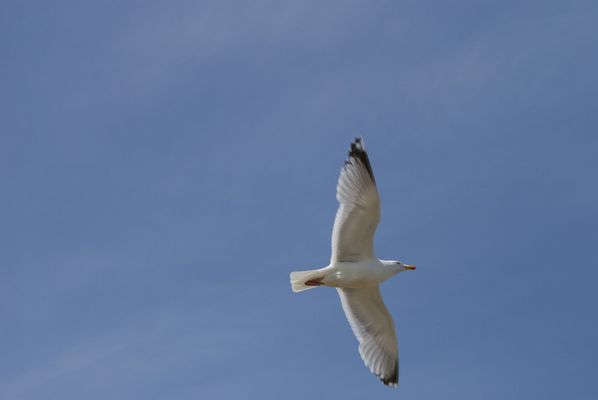 Voler de ses propres ailes