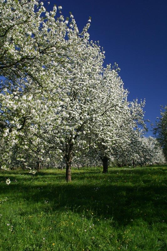 Voll der Frühling 1