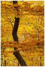 Voll der Herbst!