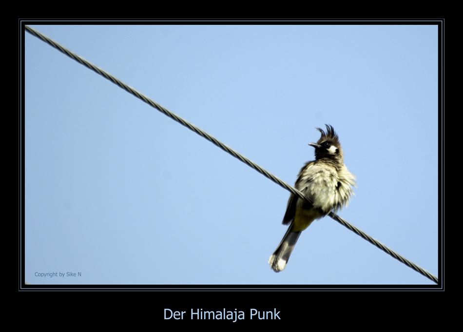 Voll der Punk ey...