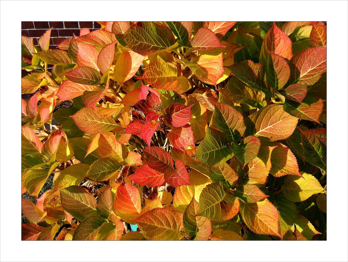 voll die Herbstfarben!