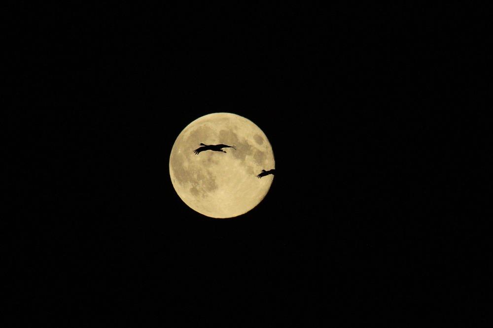 Voll vor dem Mond
