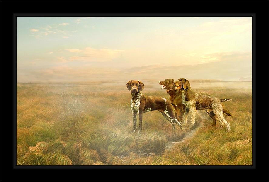 Vollblutjagdhunde