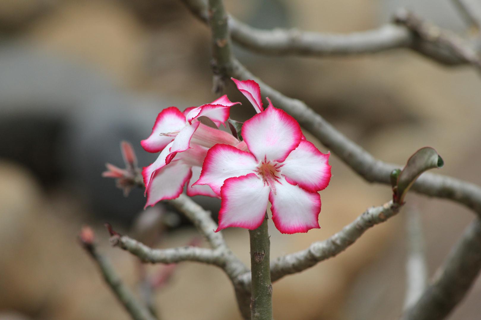 Volle Blütenpracht?