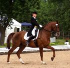 Volle Konzentration bei Reiter und Pferd