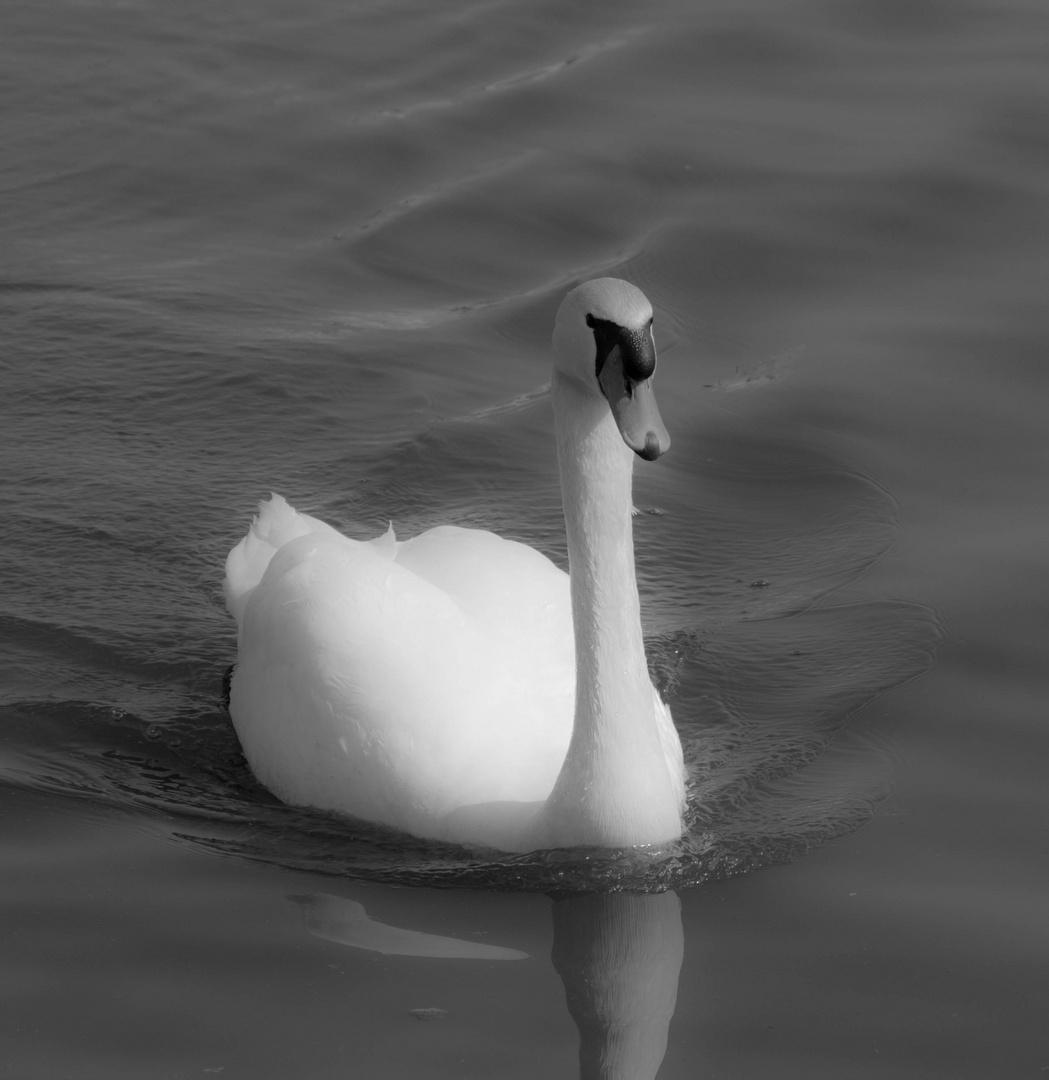 Voller Stolz auf dem Wasser