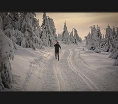Vollgas im Winterwald