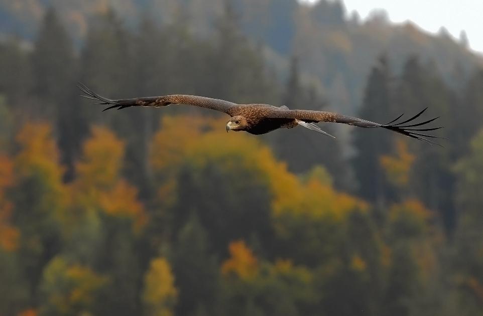 volo d'autunno