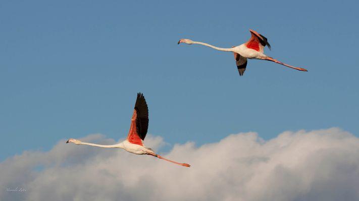 volo di coppia
