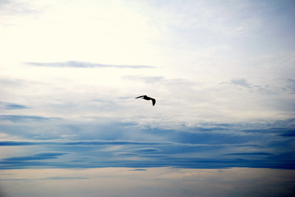 Volo solitario