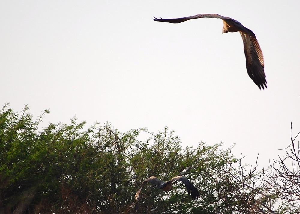 volo sulla savana