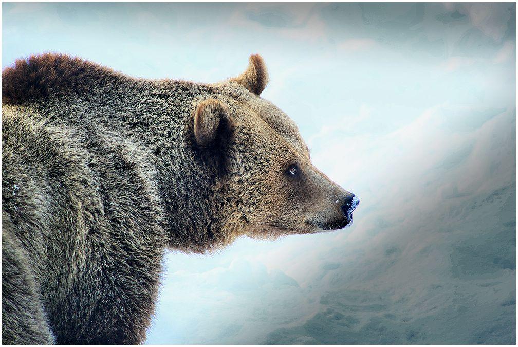 vom bären...