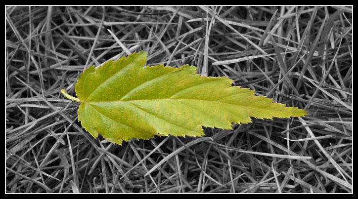 Vom Baum des Lebens fällt