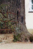 Vom Baum gefangen