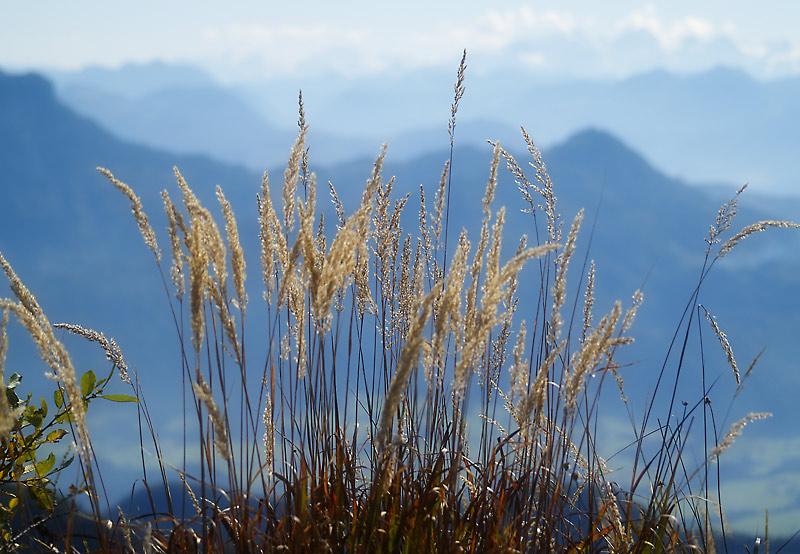 ... vom Breitenstein-Gipfel bei Schleching, Chiemgau