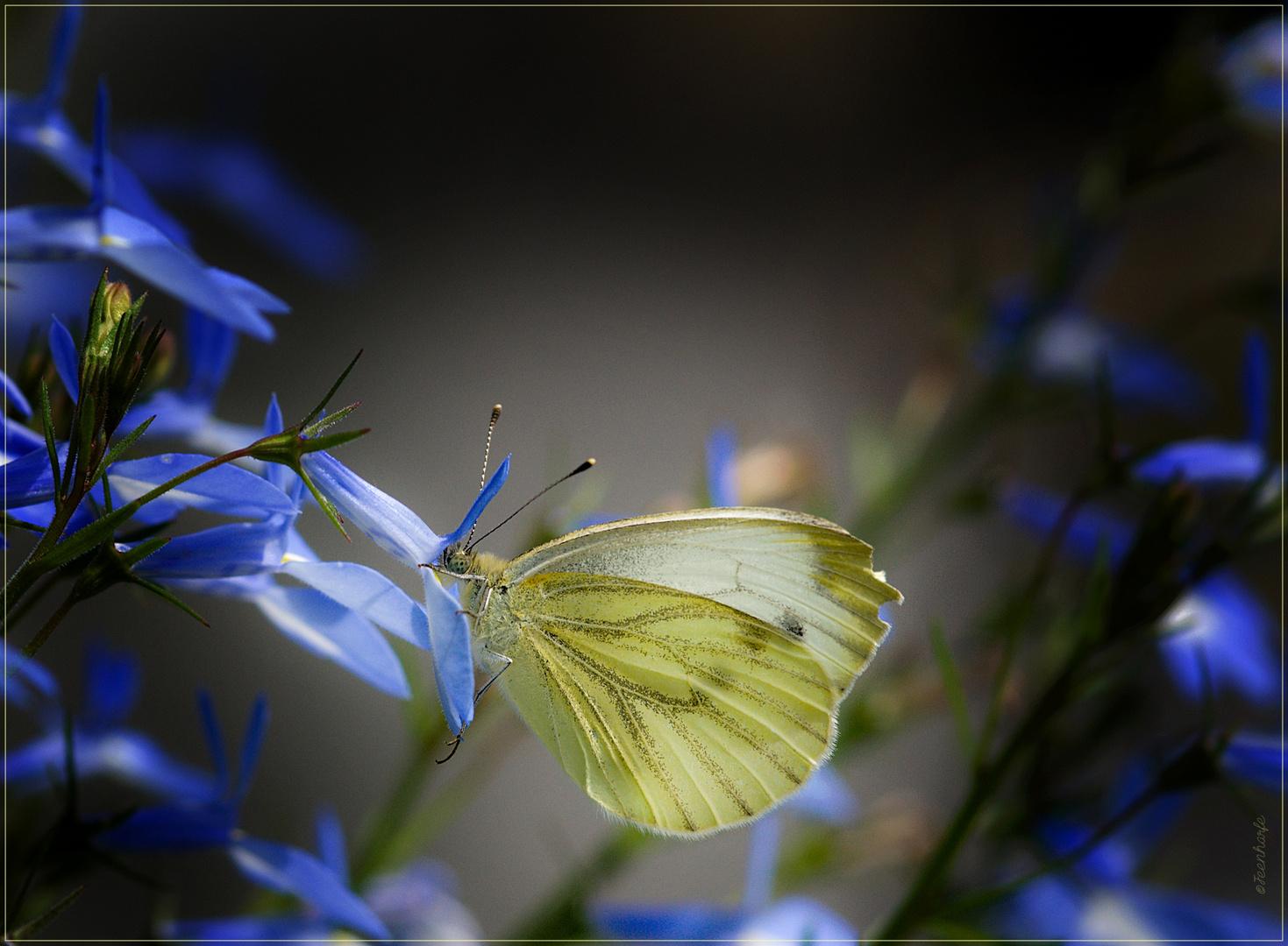 Vom Duft der stillen Blüte
