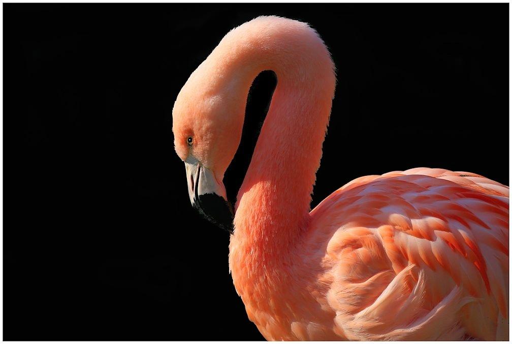 vom flamingo...