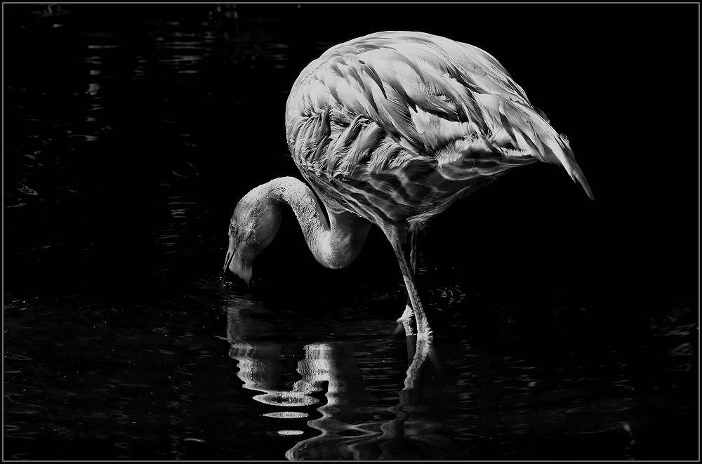 vom flamingo....