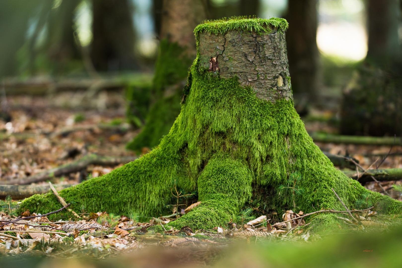 Vom grünen Teppich überwuchert