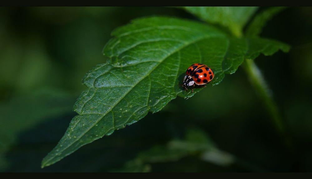 vom käfer...