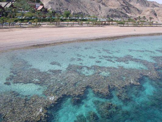 Vom Leben der Korallen...