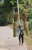 Vom Leben der Thais - Transport im Dorf