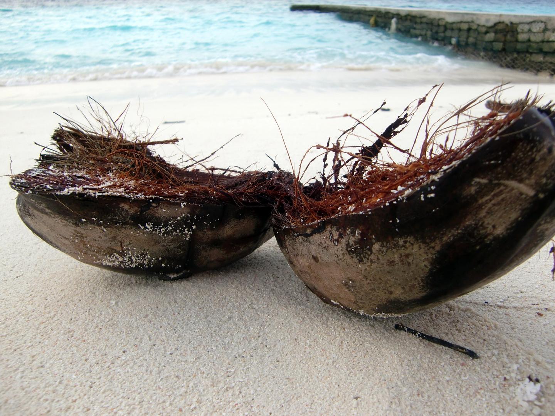 vom Meer angespülte Kokosnuss