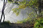 vom Nebel in die Sonne
