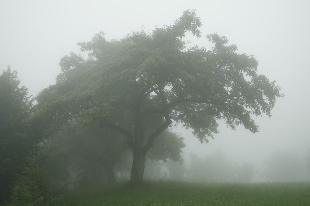 vom Nebel umarmt