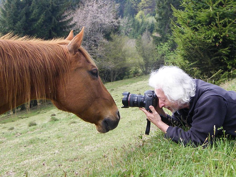 Vom Pferd gemobbt